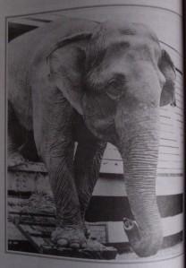 De l'eau pour les éléphants - illustration 1